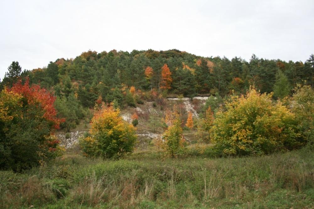 Rezerwat Dąbie